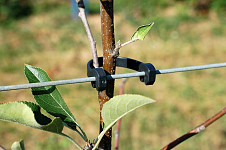 Tree clip