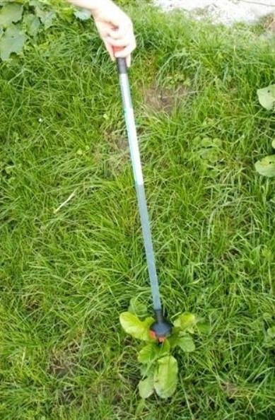 Weedstick